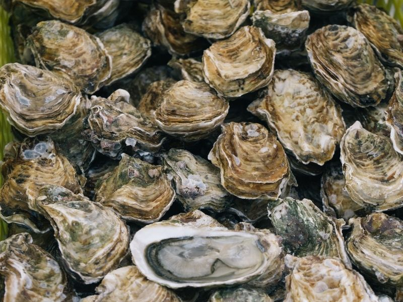 Oysters, Ston
