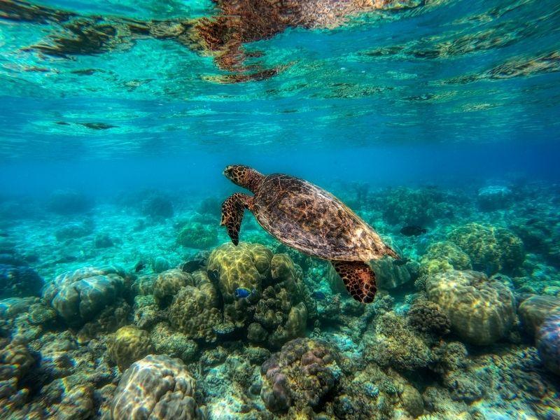 Maldives Lagoon
