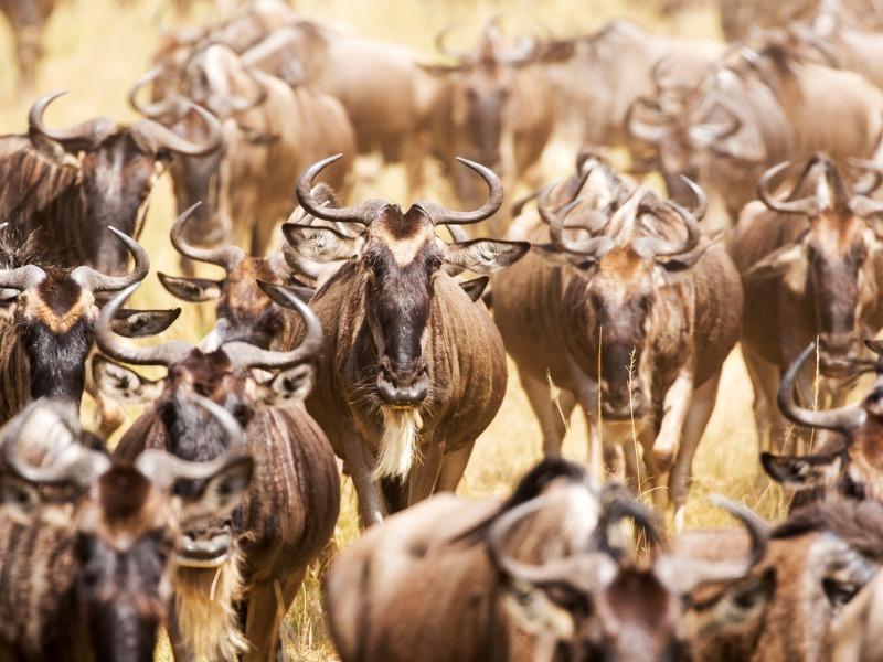 Migration Masa Mara