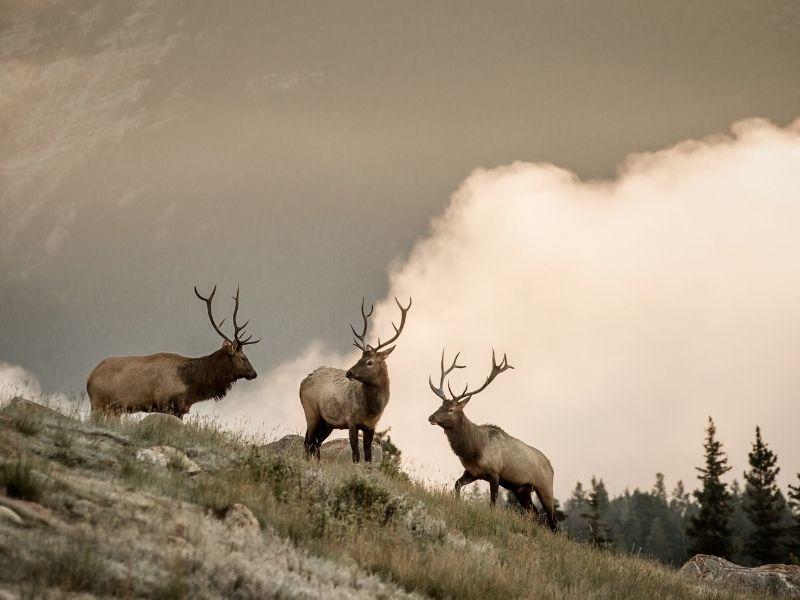 Rocky Mountaineer Wildlife