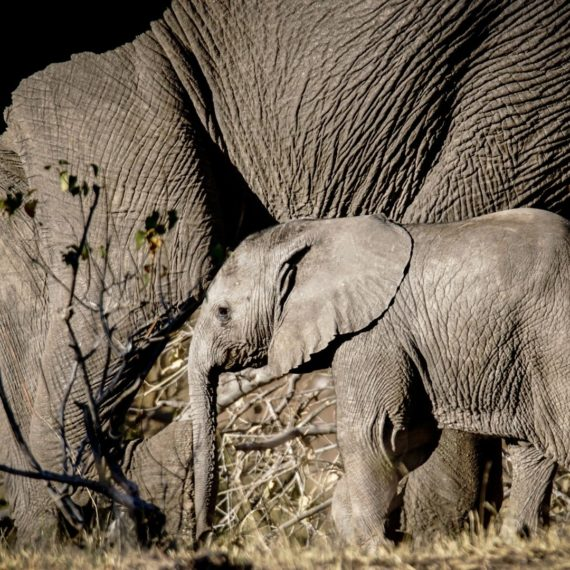 Wilderness Safaris Hoanib