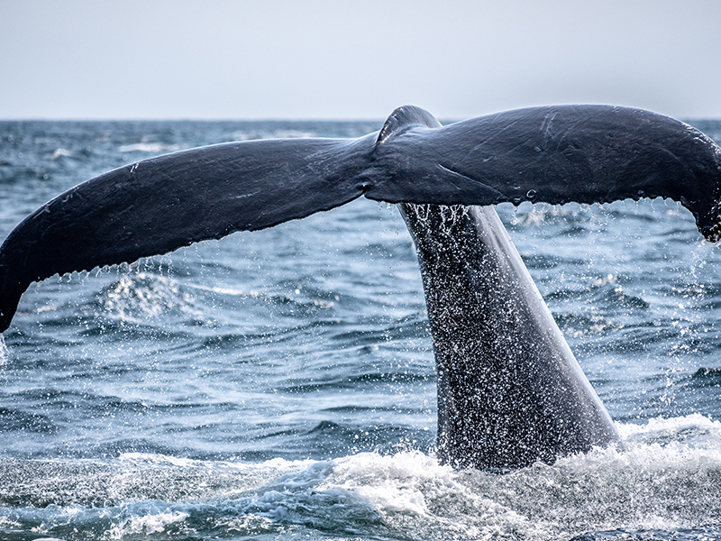 Whale Argentina