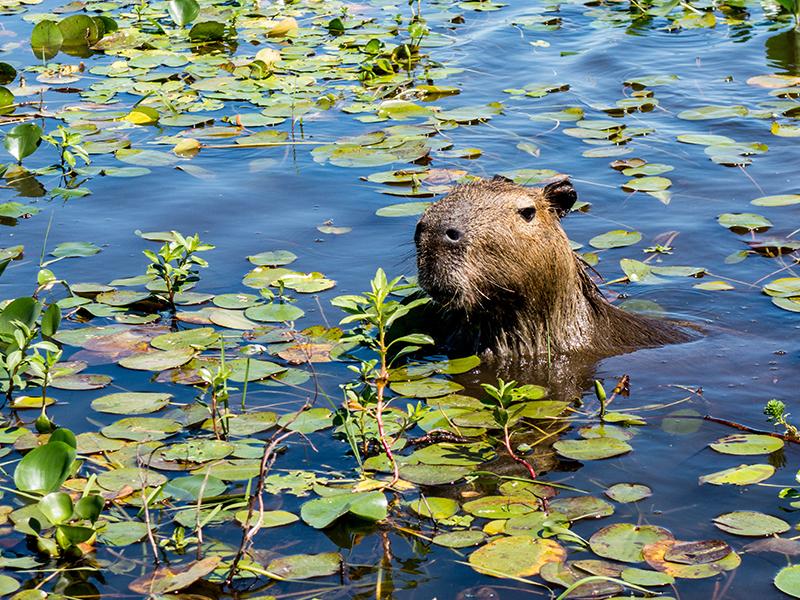 Ibera Wetlands Argentina