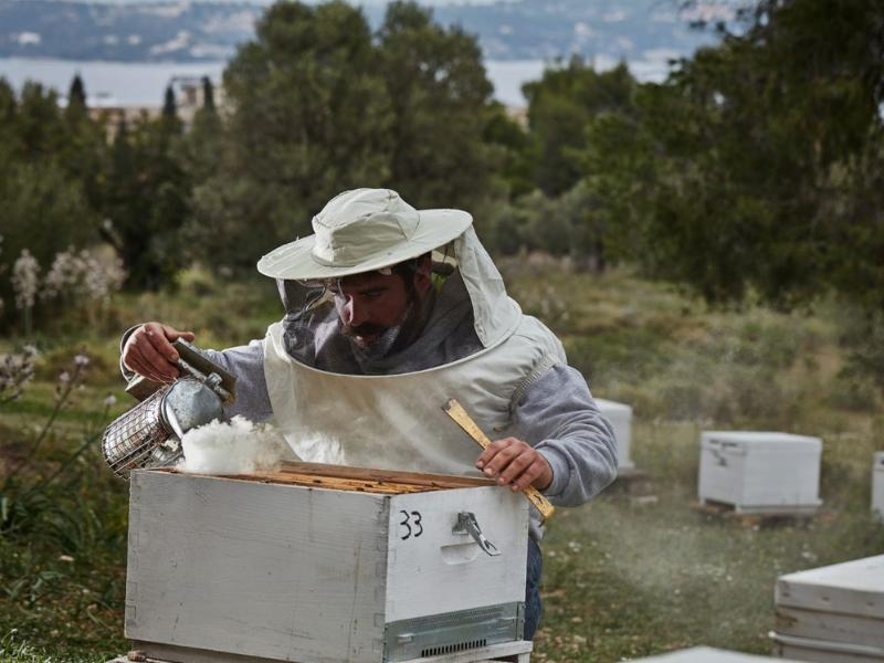 Beekeeping workship Spetses Greece