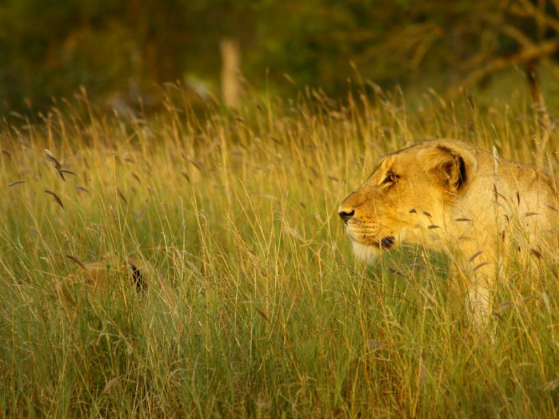 Big Five Thornybush Game Reserve South Africa