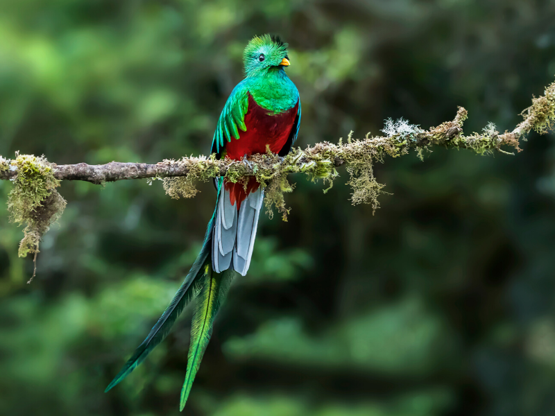 Birdlife in Costa Rica