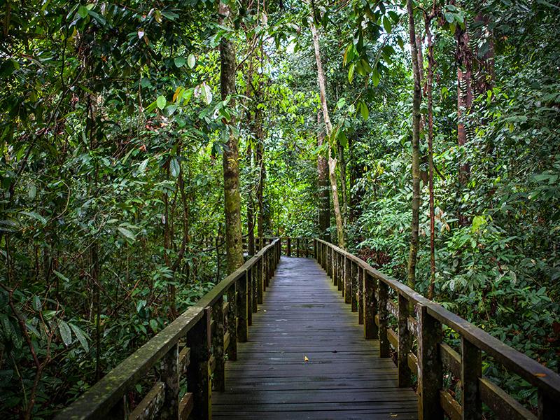 Sepilok Nature Reserve Myanmar
