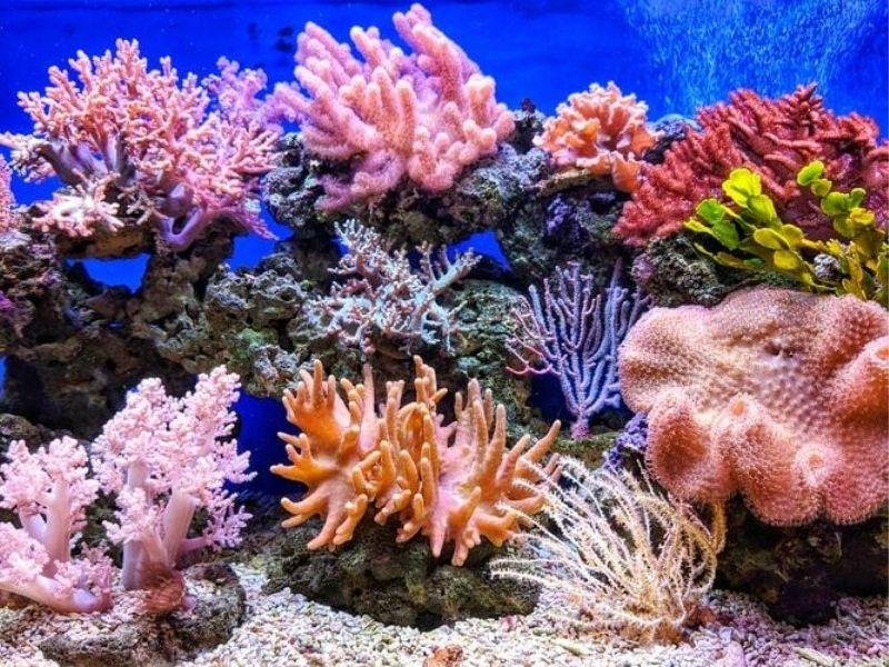 Coral reef, Caribbean