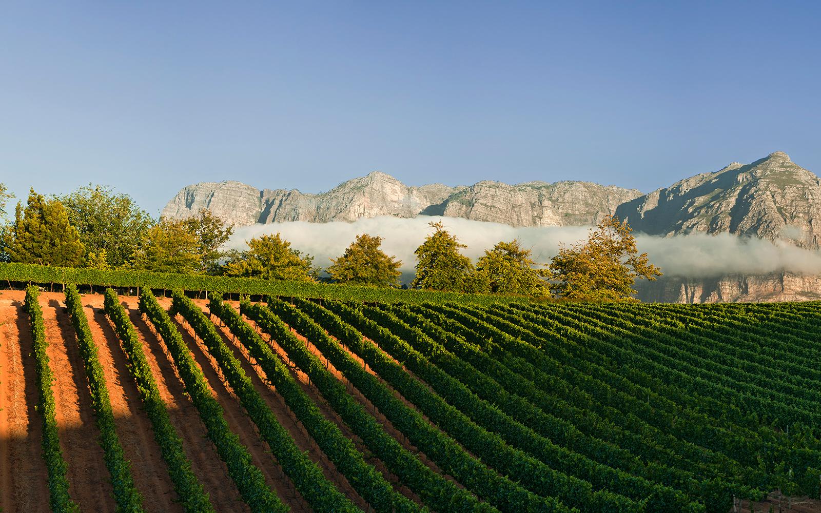Delaire-Graff-Winery