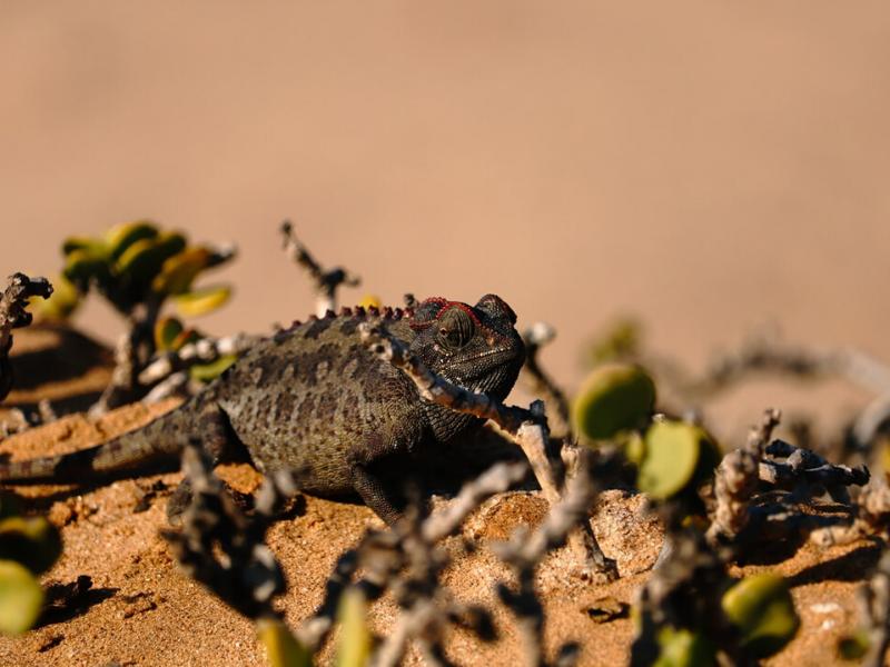 Desert living in Namibia