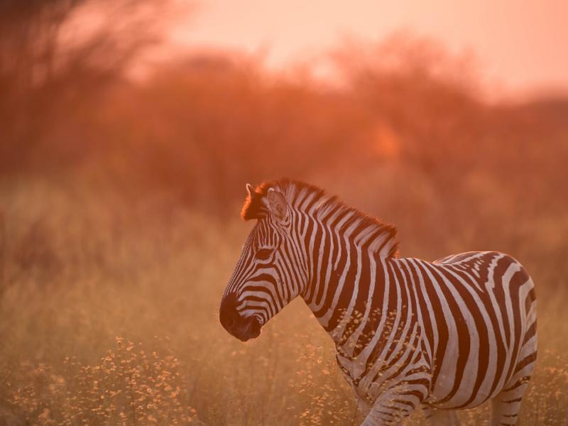 Dinaka Botswana Wildlife