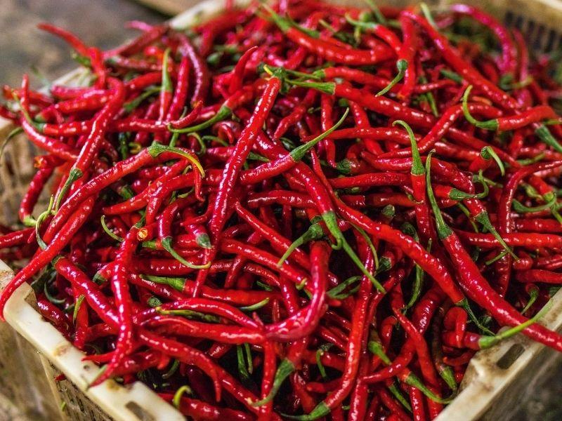 Guyana chilies