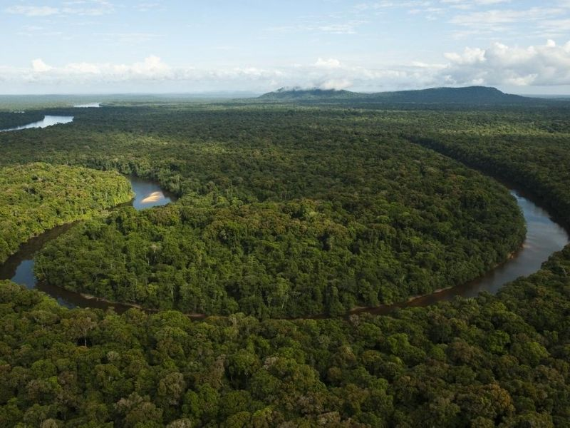 Guyana river running through forest