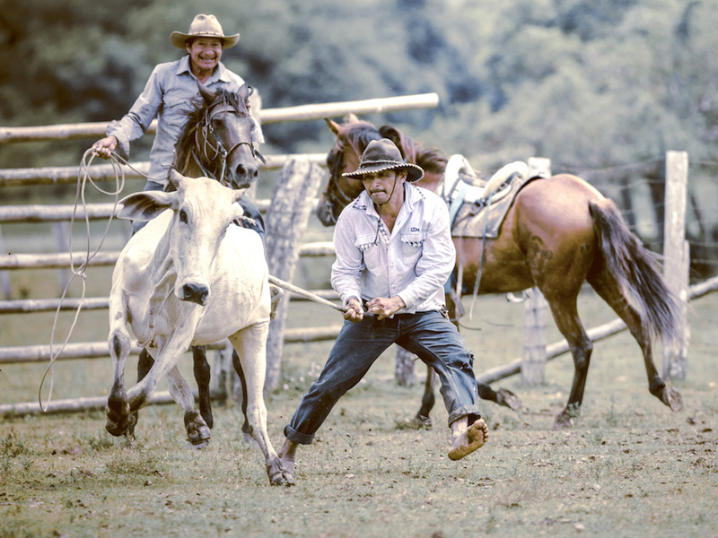 El Yopal Cattle Ranch