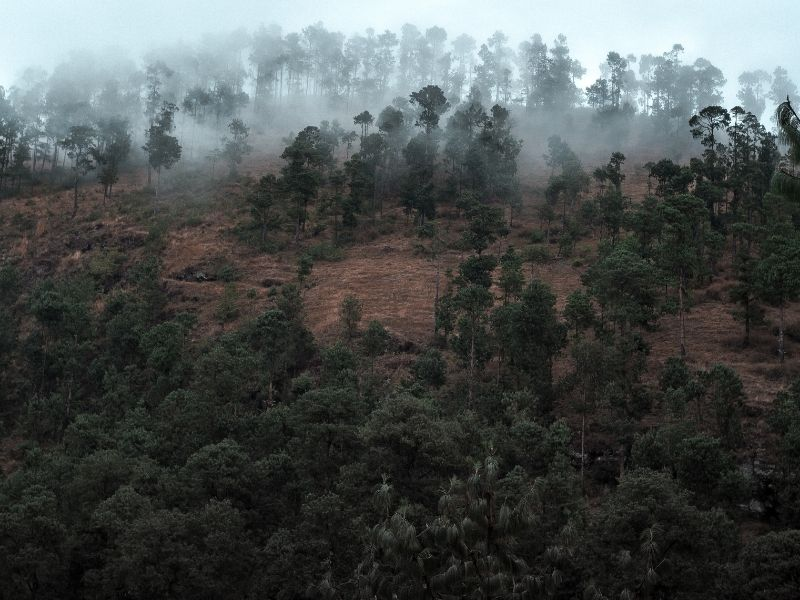Forest in Madagascar