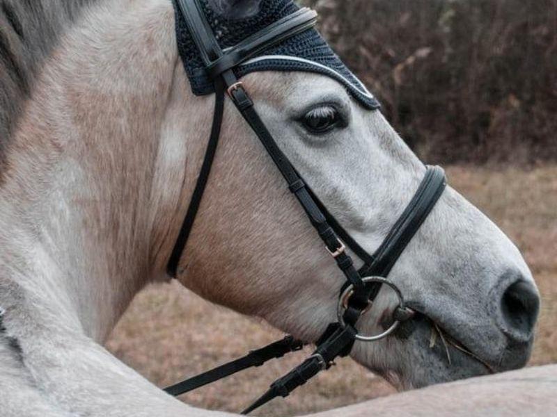 Horseback riding, Jabali Ranch, Mexico