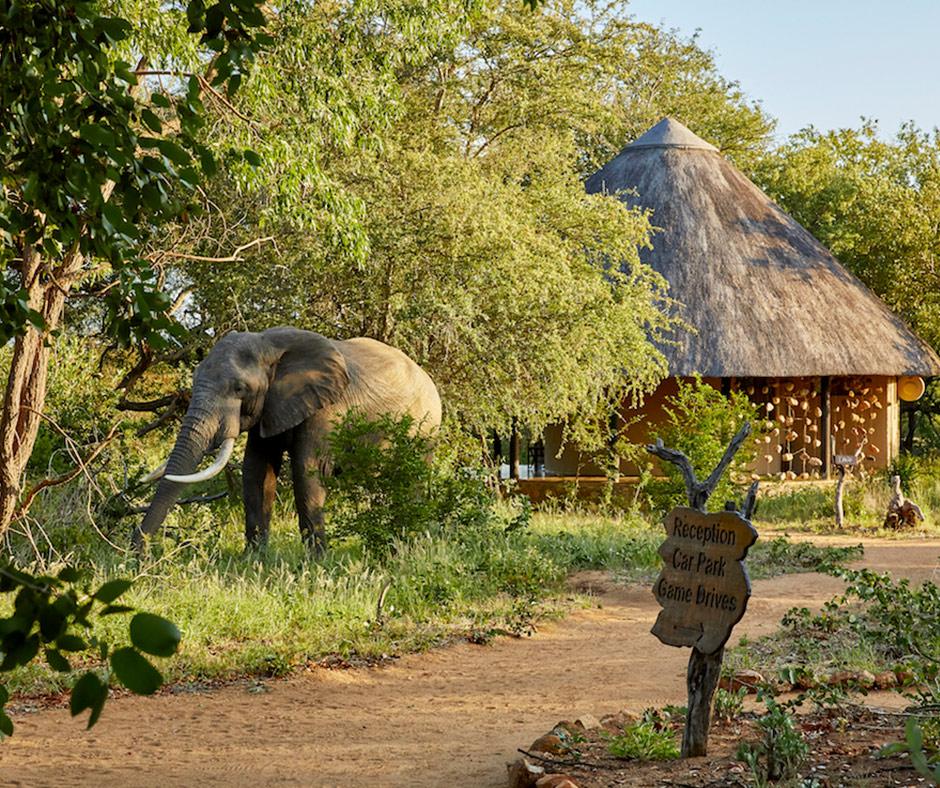 Motswari-Lodge