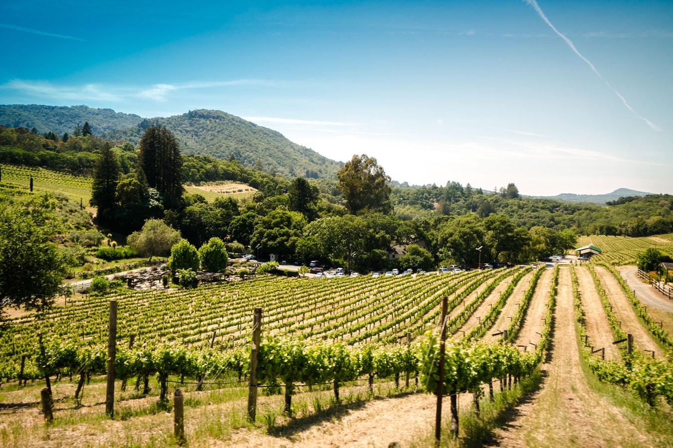 Enjoy a Vineyard Tour in Tuscany