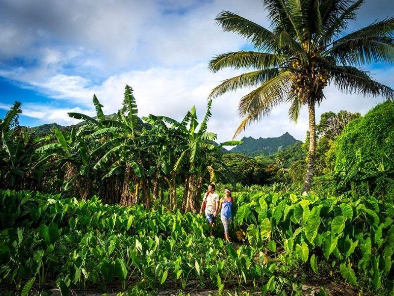 Jungle adventure, Rarotonga