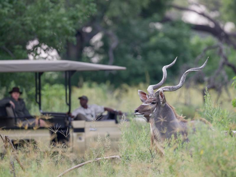 Kanana Botswana Safari