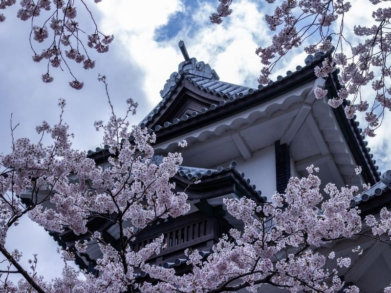 Cherry blossoms in front of Kanazawa Castle, Japan