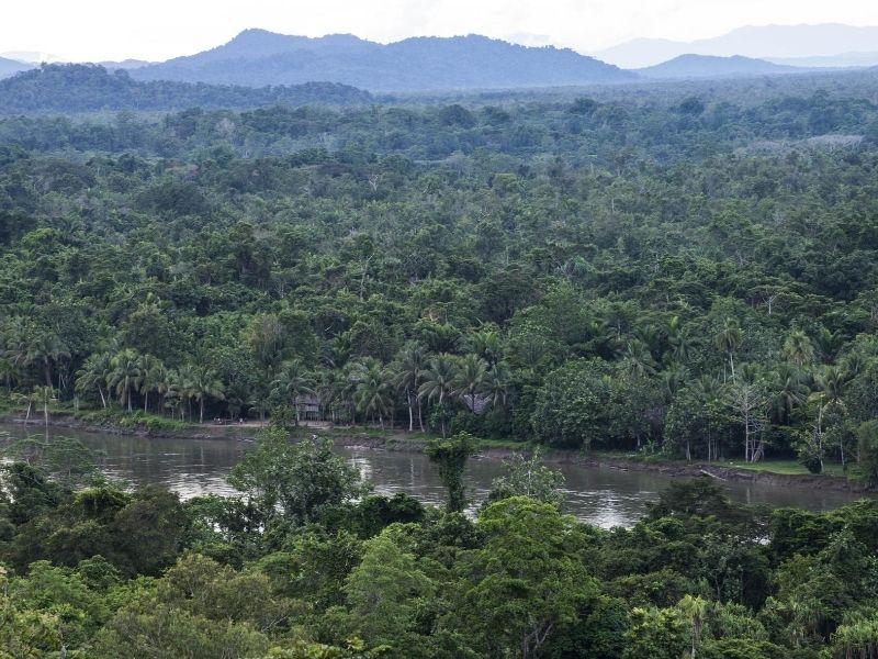 Karawari jungle