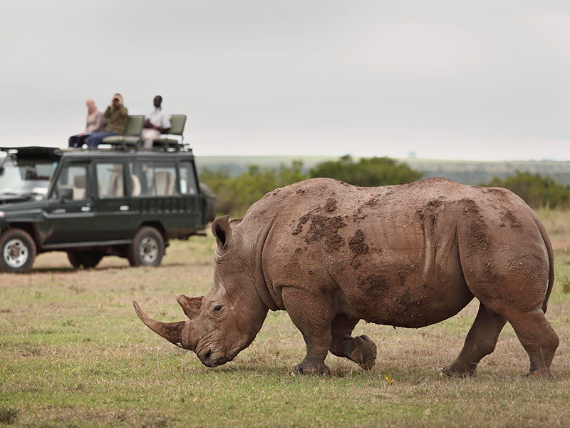 Kenya Classic Vehicle Safari