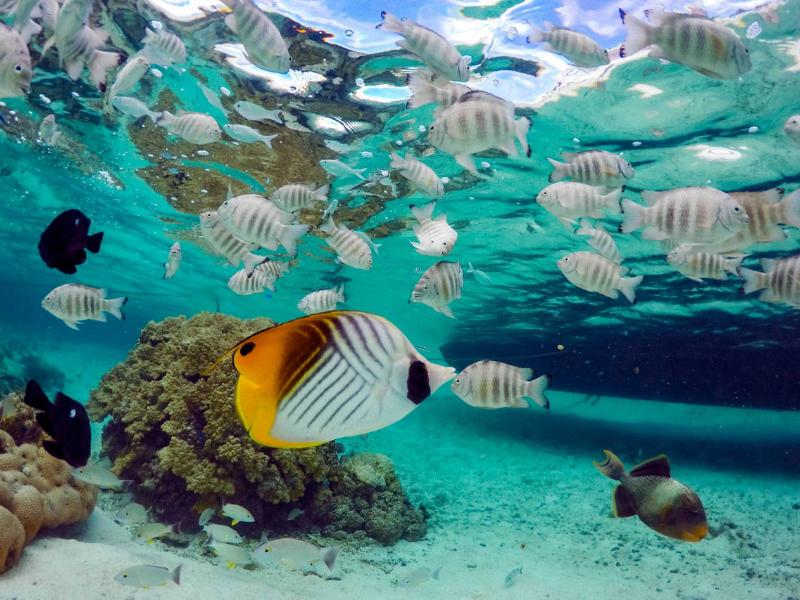 Marine Life Ninamu Snorkelling French Polynesia