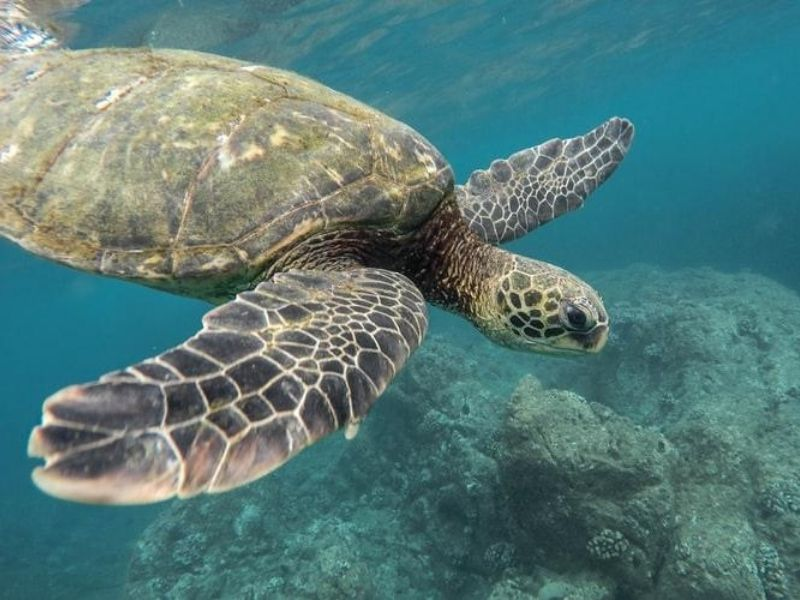 Marine life, Pacific Ocean