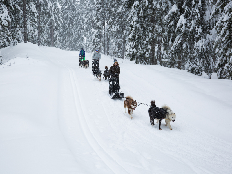 Meribel Dog Sledding