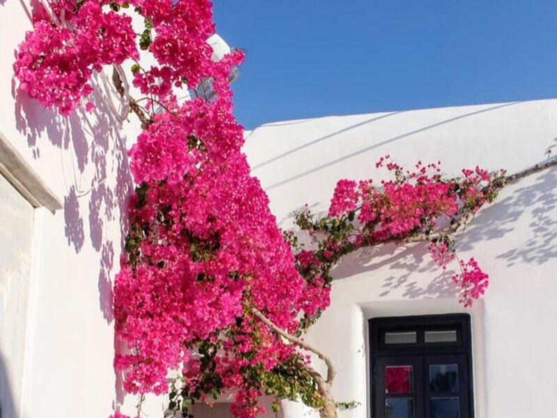 Mykonos Beauty Greece