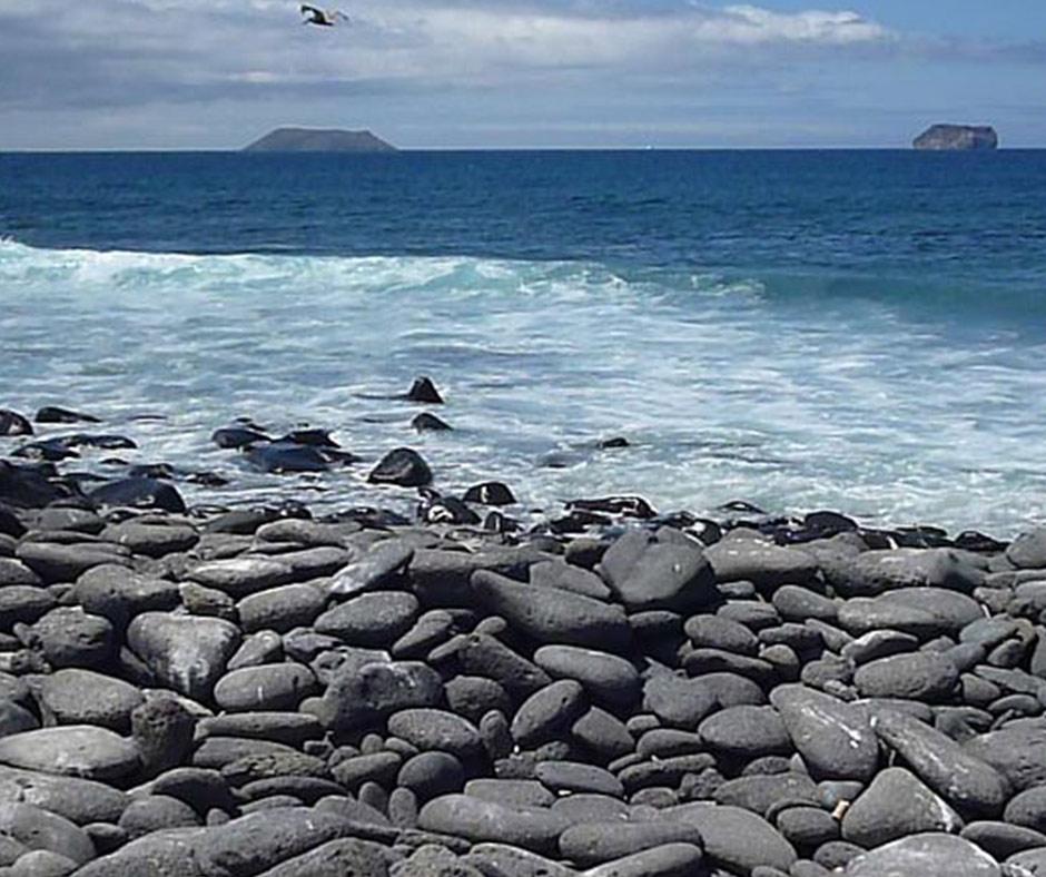 North-Seymour-Galapagos