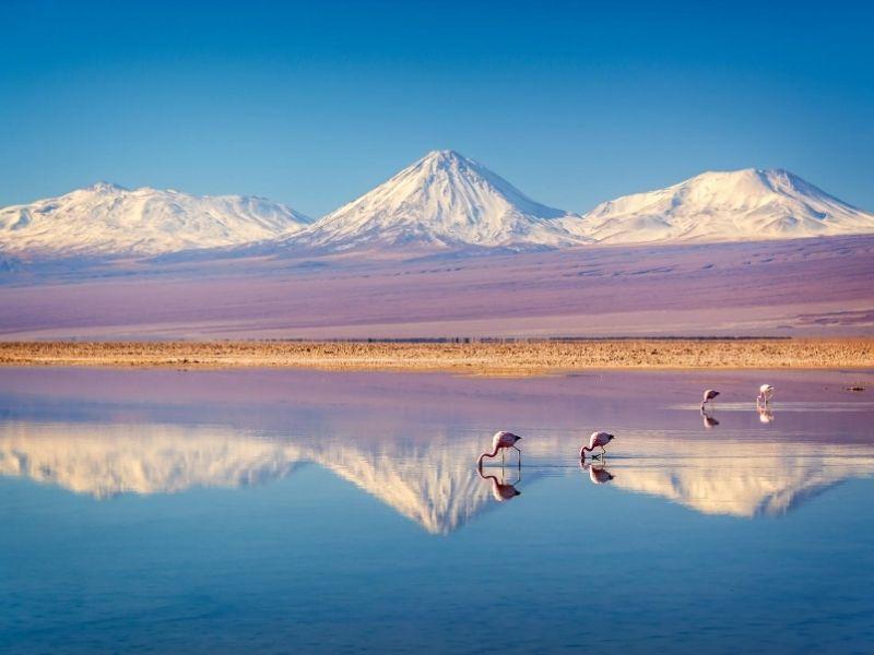 Flamingos in Atacama Desert, Chile