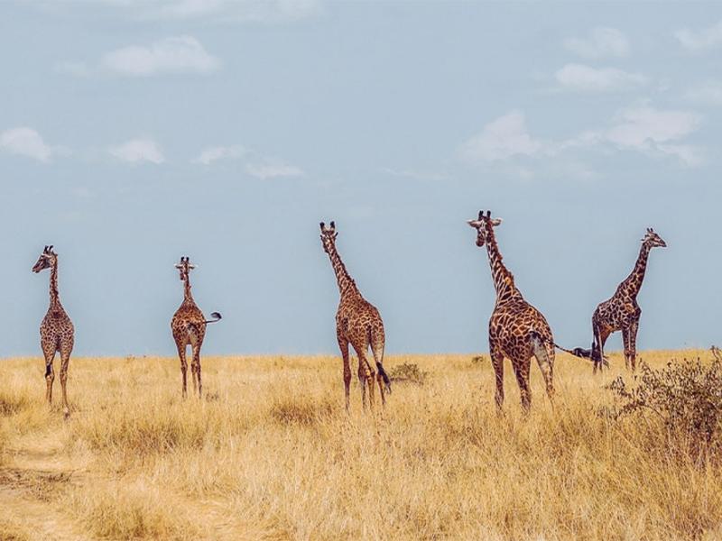 Out of Africa, Karen Blixen Kenya
