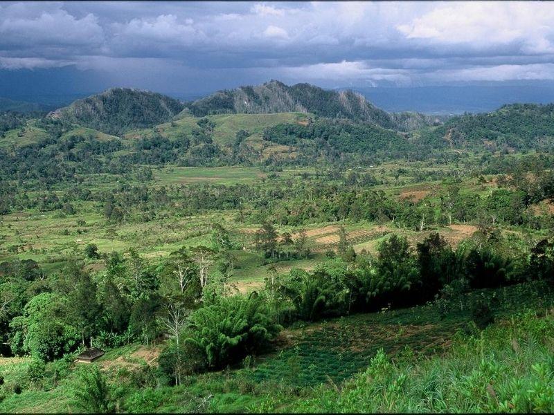 Papua New Guinea jungle