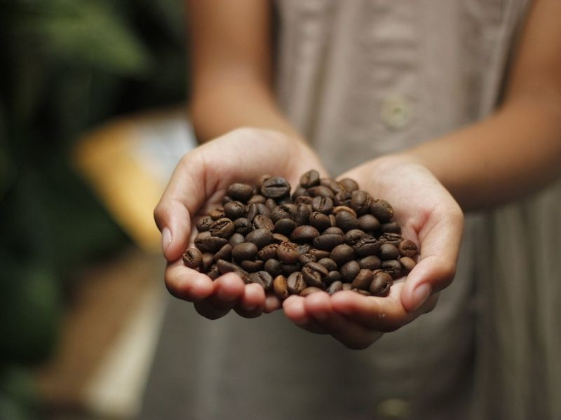Roasted coffee beans, Guatemala