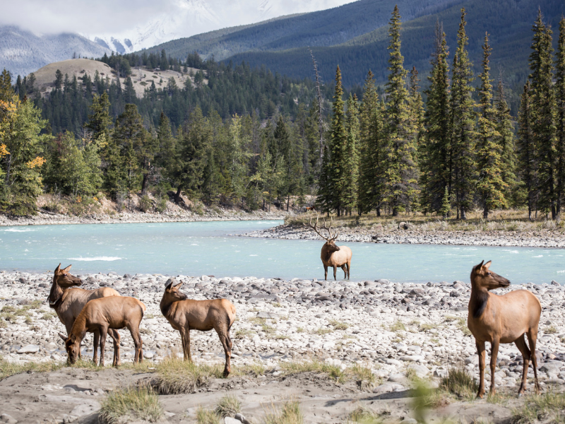 Rocky Mountaineer - Canada Wildlife