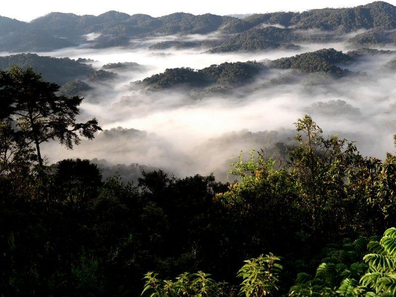 Mist over Nyungwe National Park, Rwanda