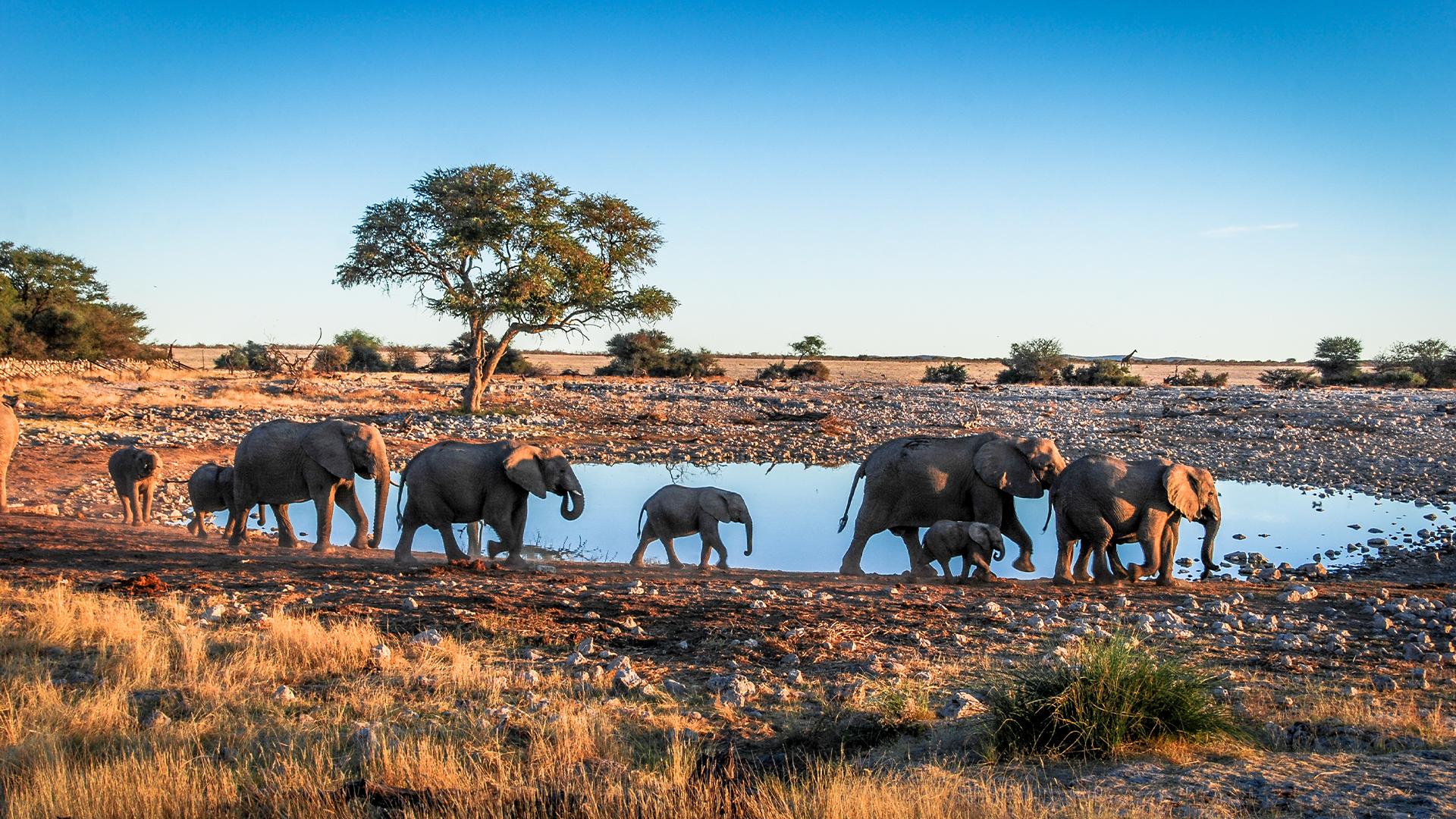 Safari-in-Namibia-for-families