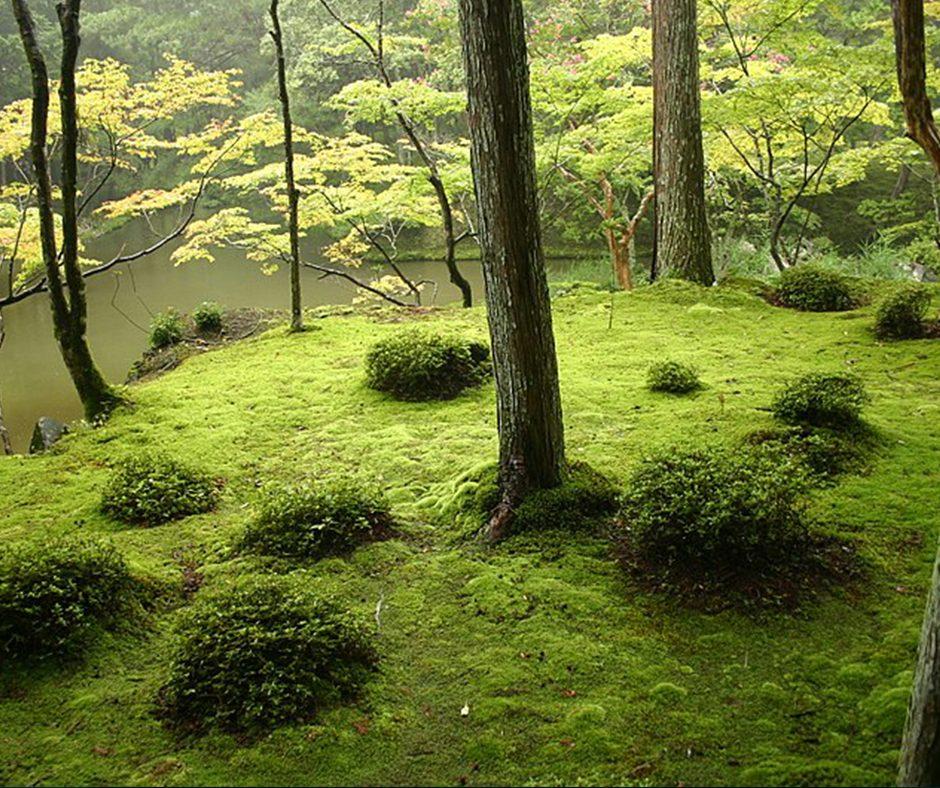 Saiho-Ji-Japan