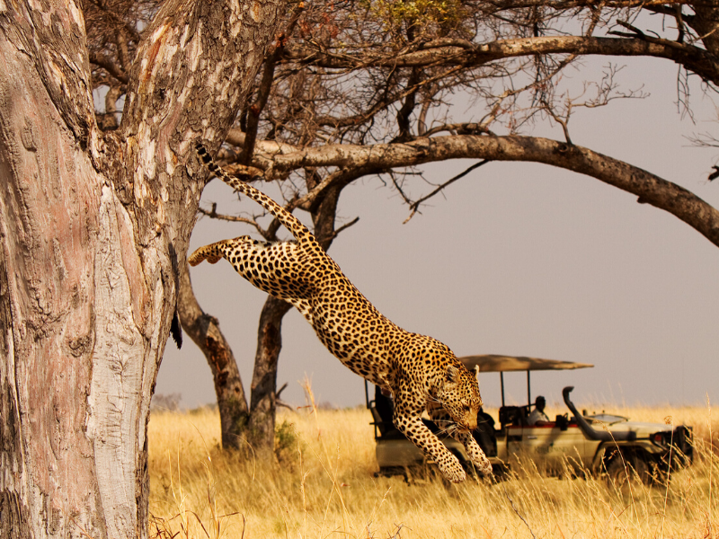 Shinde Safari Botswana