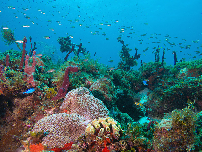 Snorkeling Grenada
