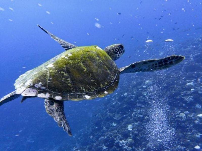 Snorkelling safari, Aitutaki