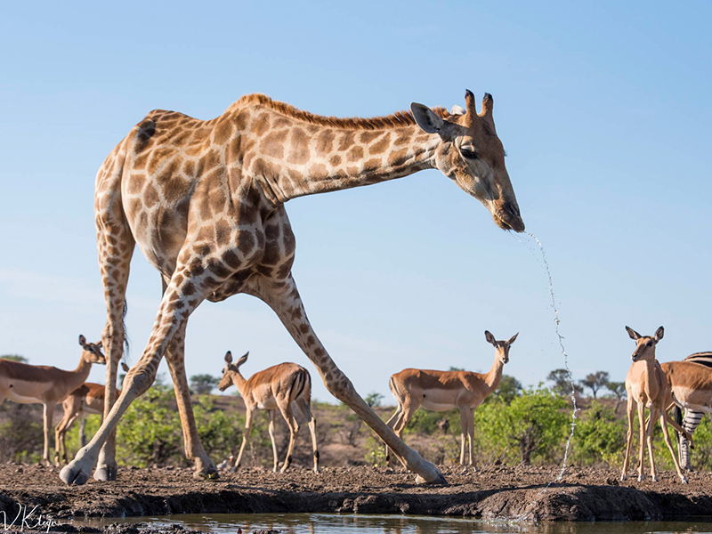 Mashatu Botswana