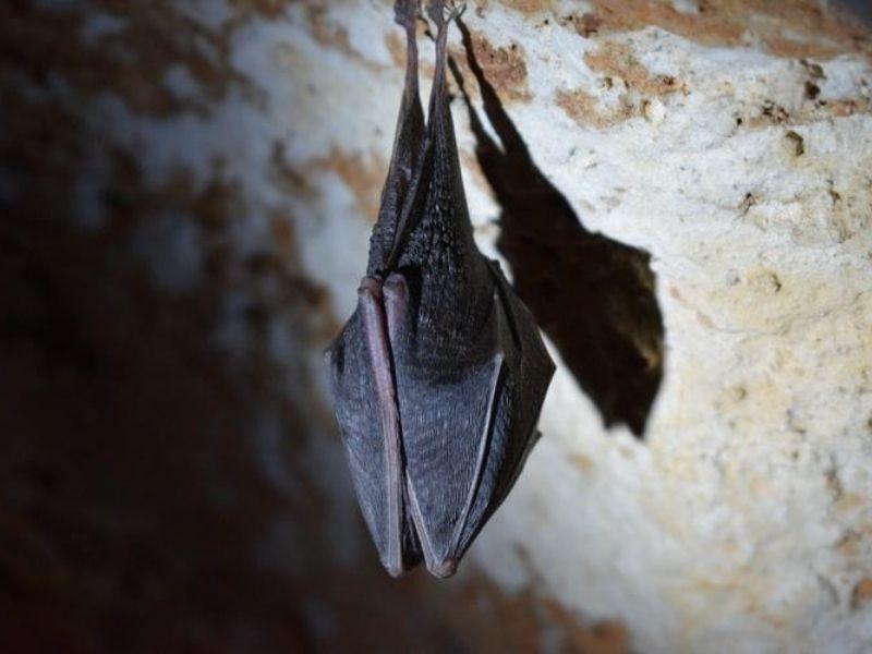 St. Lucia Soufrière Bat Cave