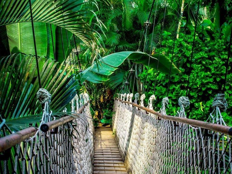 Suspension Bridge Amazon Rainforest