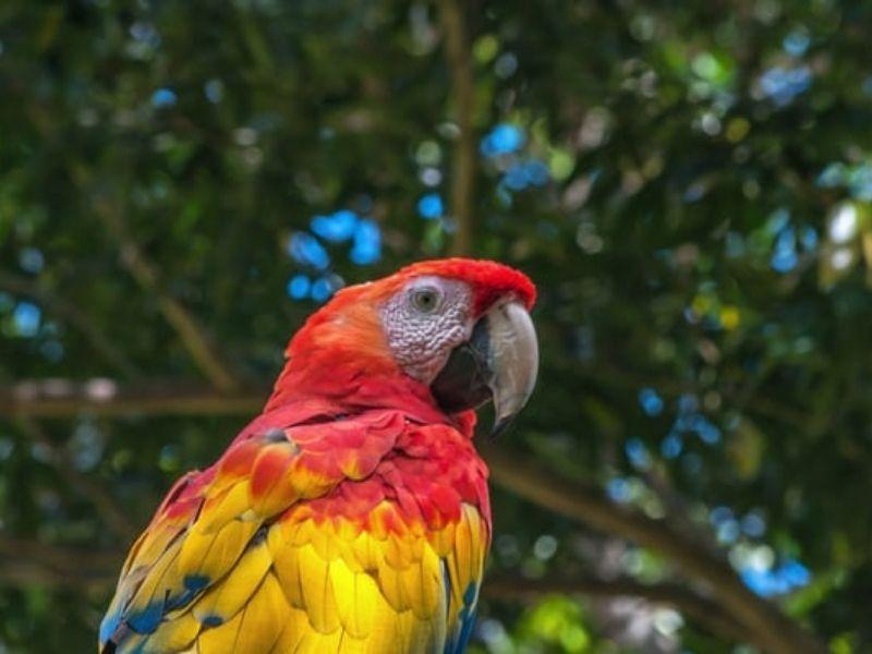 Tropical birds, Guatemala
