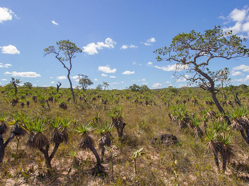 Cerrado Brazil