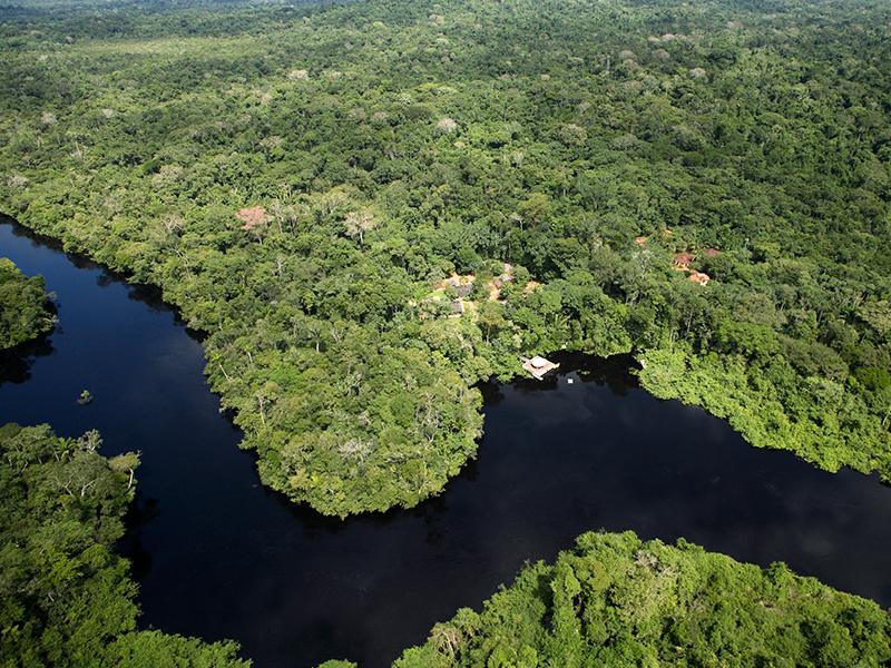 Amazon Rainforest Brazil