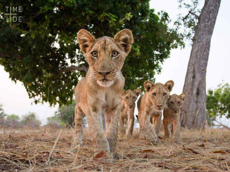 Wildlife viewing in Zambia